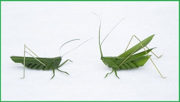 syurobatuta170801-3.jpg